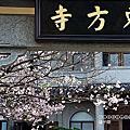 (709)2020.04.11台北東方寺櫻花