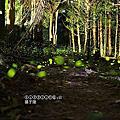 (708)2020.04月北部螢火蟲