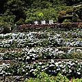 (791)2021.05.09台北|大梯田花卉生態農園