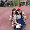 (794)2021.08.13南投集集|粉芒園粉紅粉黛亂子草