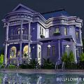 bellflower blue 桔梗藍