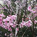2015吳家春節宜蘭兩天一夜走春之旅