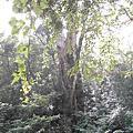 2007.09拉拉山森林