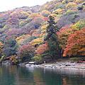 日本嵐山賞楓