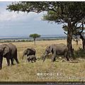 2014東非動物