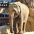 【日本自由行】大阪天王寺動物園