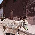 Peru_Animals