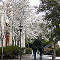 2010 Stanford Spring