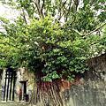 |遊。台南|安平樹屋/老街