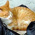 20101016 侯硐看貓咪卻遇大雨