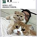 親人訓練 親貓訓練實例