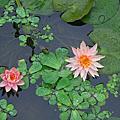 北埔人文與綠世界大自然雨中踏青遊