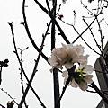 2019*竹南*小里的春天*