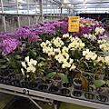 A65-金車蘭花園