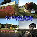 2017新社花海