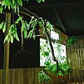 南投埔里餐廳-牛耳樹屋餐廳