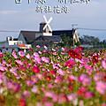NO049:台中縣新社鄉新社花海