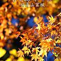 NO051:台中縣和平鄉福壽山賞楓
