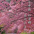 NO068:武陵春雨戲佳人