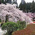 2006 京阪春櫻 DAY4