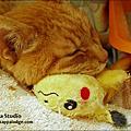 生病療養中的小ann貓