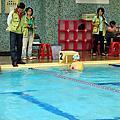 20131123 全市運游泳