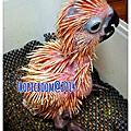 2014 鸚鵡幼鳥