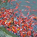 來梅嶺我們家小朋友最喜歡去文川餵魚99-03-20
