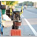 台南賣菱角的狗狗