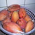 2009黃金Mango~玉井芒果節98-07-04