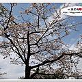 9703_阿里山之櫻