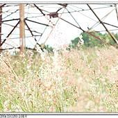 2015/10/08 霧峰.中心隴登山步道.阿罩霧山.萊園相簿封面