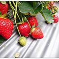 20200209大湖採草莓