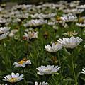 [走走] 090403 臺北植物園