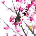 2011-02-06-NND活動誌-大凍山之行
