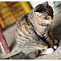 2011-04-04-NND旅遊誌-侯硐,嶺腳,平溪行
