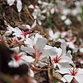 2014/4/26 東勢林場