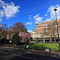 Cherry Blossmon @ London