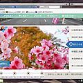 2018台北茶花節-士林花卉中心