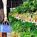 桃園草菓農場採草莓