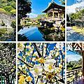 台北雙溪公園梅花青青食尚花園下午茶