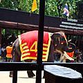 泰國-大象表演