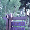 2009.11.21 新竹內灣 薰衣草