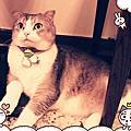 20121215_野貓中途咖啡廳