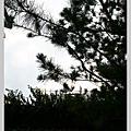 2009.12.05-06 花蓮遠雄悅來2日遊