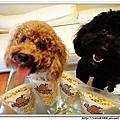 小狗兩隻與Andrea 5