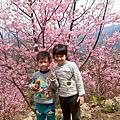 105櫻花季