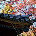 2013東京之旅:橫濱三溪園