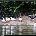 汐止好水系列-金龍湖畔