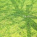 2011礁溪美景11.06